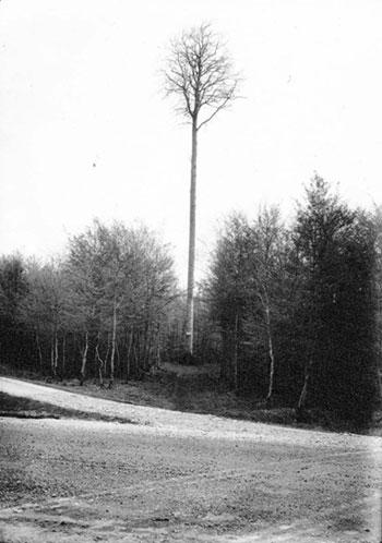 Les vieux arbres de la Normandie
